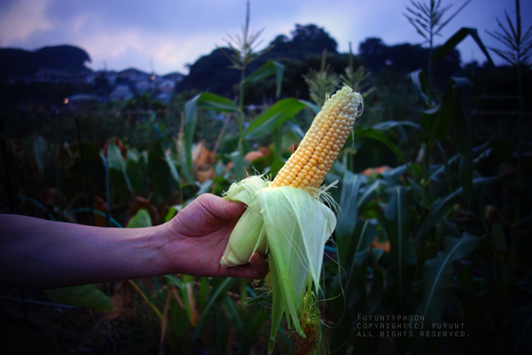 yokosuka, Japan, field work, summer 2015, (h)fuyunt